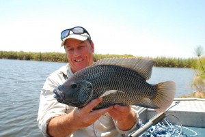 a-good-quality-threespot-bream-that-ate-a-curly-tail-grub