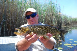 pike-are-often-caught-on-lures-when-targeting-bream-in-quiet-pools