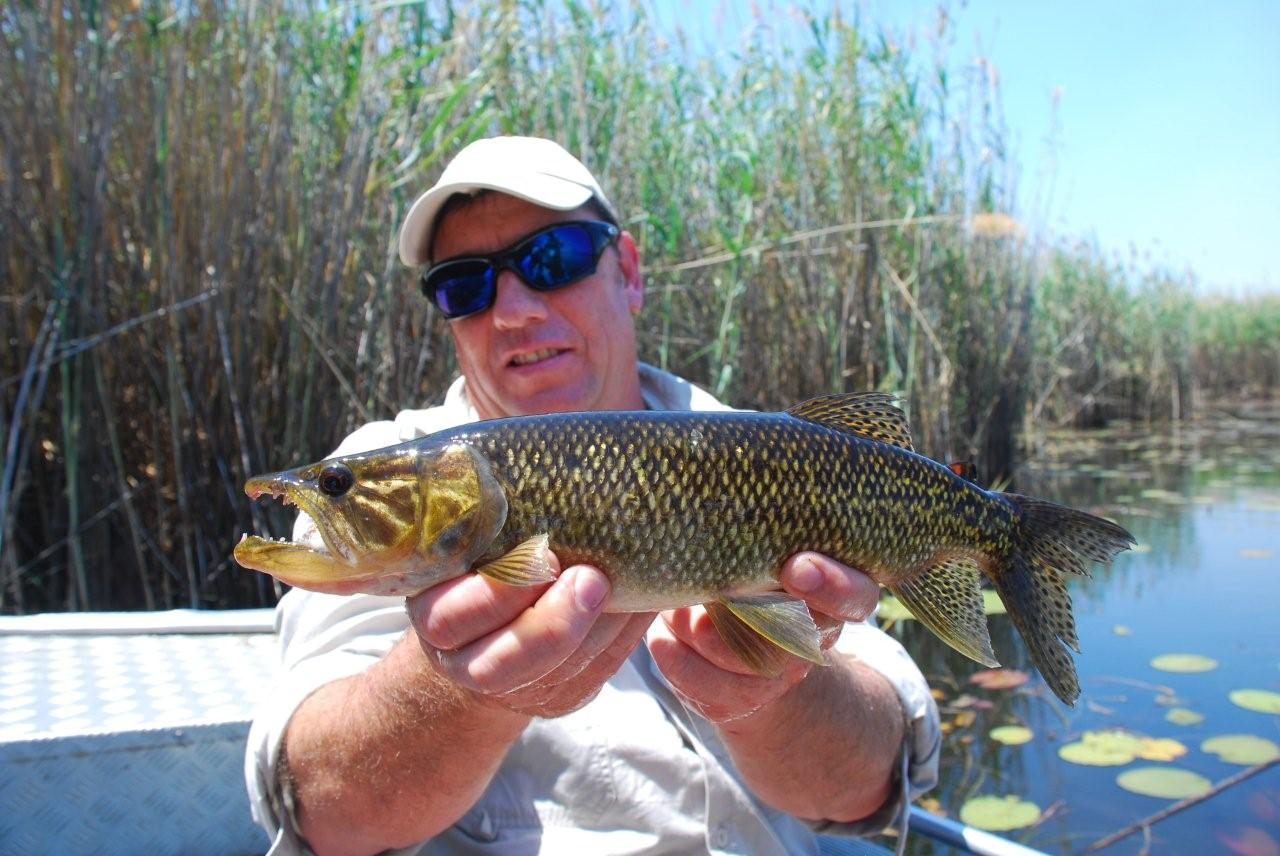 Artificial lure for bream angler 39 s talk magazine for Bream fishing bait
